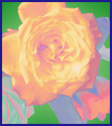 2D Digital Art – Roses 4 U